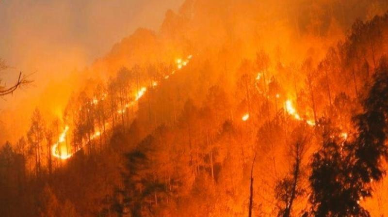 उत्तराखंड में वनों की आग का मामला : सुप्रीम कोर्ट ने याचिकाकर्ता को अतिरिक्त दस्तावेज दाखिल करने की अनुमति दी