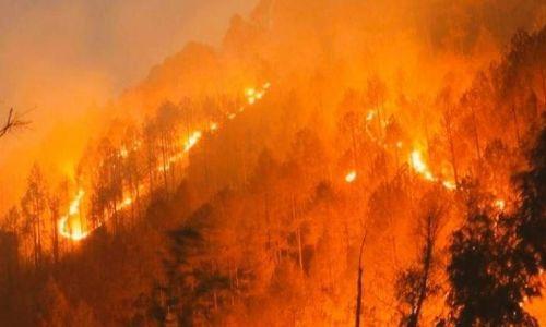 उत्तराखंड में वनों की आग का मामला सुप्रीम कोर्ट में, 24 जून को सुनवाई को तैयार अदालत
