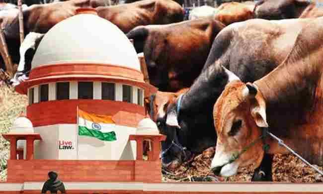 एक व्यक्ति अपनी पांच गायों के इलाज की गुहार लेकर सुप्रीम कोर्ट पहुंचा, अदालत ने दिया यह फैसला