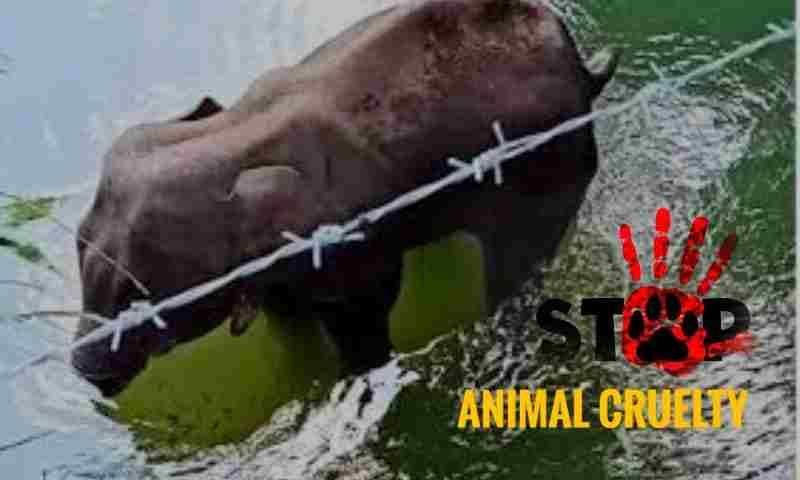जानिए जानवरों का वध करने और उनके प्रति क्रूरता करने से संबंधित अपराध