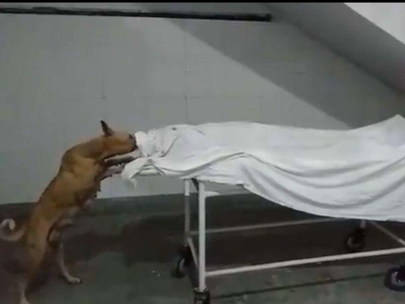 यूपी के अस्पताल में कुत्ते द्वारा शव को नोचने की घटना :  डॉ अश्विनी कुमार ने शवों से निपटने के लिए समान प्रोटोकॉल बनाने के लिए सीजेआई को लिखा