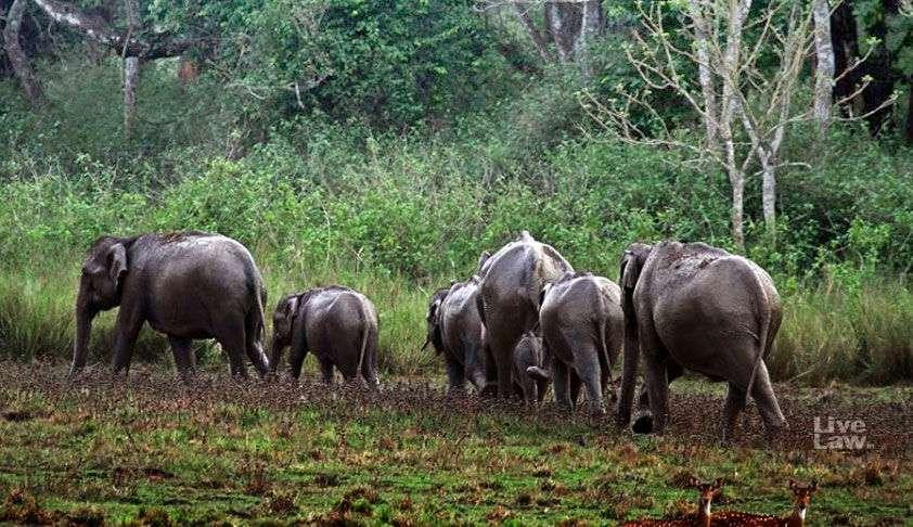 पर्यावरण और हाथी की आबादी का अपूरणीय क्षति होगी: उत्तराखंड हाईकोर्ट ने शिवालिक एलीफेंट रिजर्व को डी-नोटिफाई करने के आदेश पर रोक लगाई