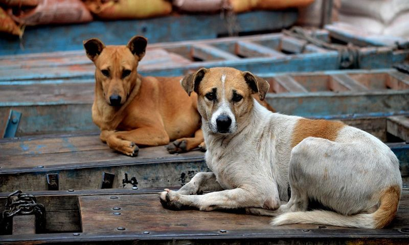 सुनिश्चित करें कि आईआईटी मद्रास कैंपस कुत्तों के लिए डंपिंग ग्राउंड न बने: मद्रास हाईकोर्ट ने राज्य सरकार से कहा